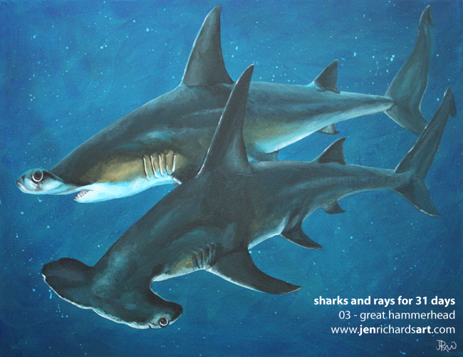 hammerhead shark pencil drawing artistic pictures www