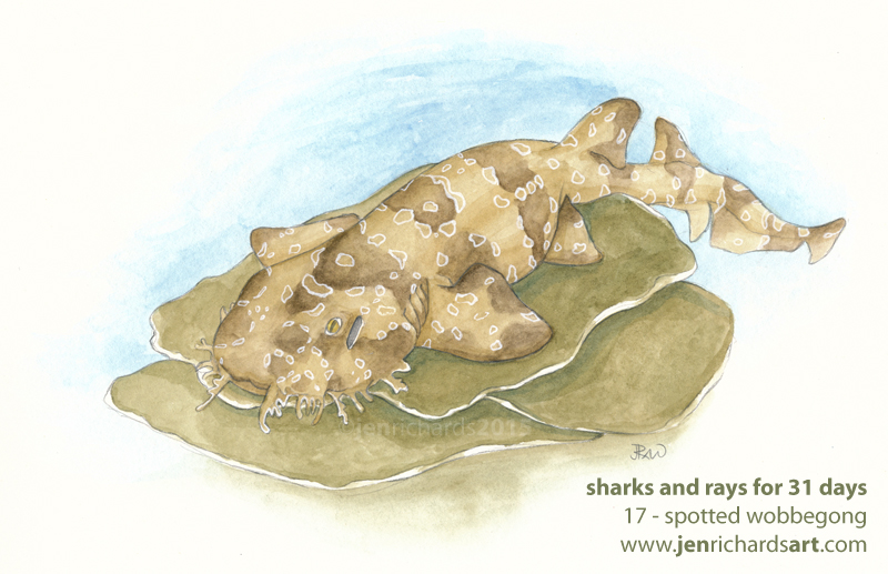 17 - Spotted wobbegong - Watercolours over pencil.